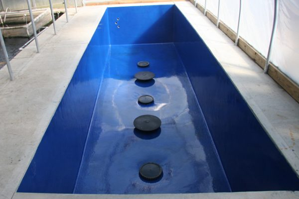 concrete pond sealed with blue pond shield epoxy