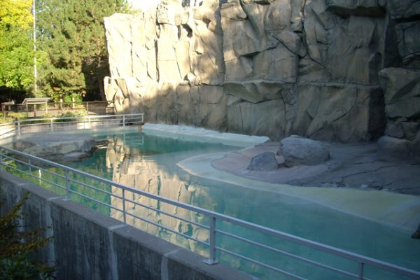 this sea lion pool is lined with non-toxic pond shield epoxy